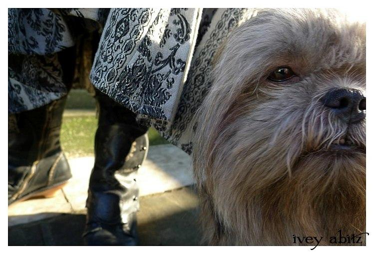 Wolfie the shih tzu closeup