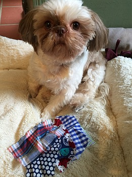 Gilbert with his fabric swatches for bowties, given to him by his fabric friends in NYC.
